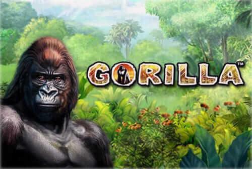 Jetzt online Gorilla spielen